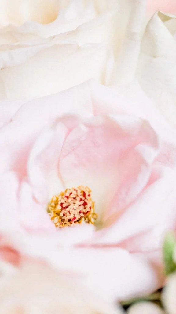 Когда цветет любовь День Святого Валентина iPhone Обои