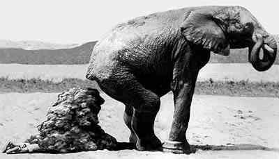 ELEPHANT_BURIES_MAN_IN_SHIT