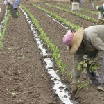 Escala salarial trabajadores agrarios OCTUBRE 2014