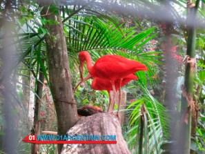 birds_iguazu05