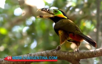 birds_iguazu06