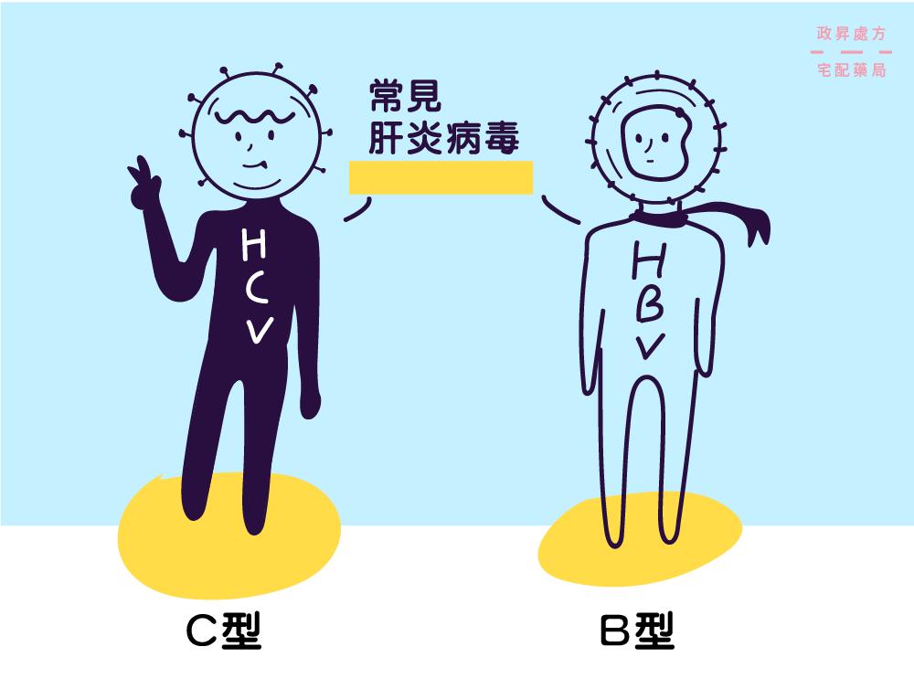 B肝病毒與C肝病毒的擬人角色
