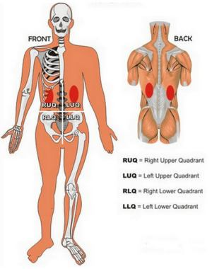 Kidney Pain : Location, Pictures, Symptoms, Causes