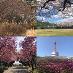 湘南の春は花めぐり