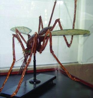 Modelo de insecto vetor