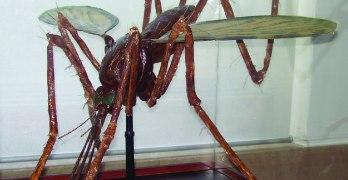 Modelo de inseto vetor de doença: Mosquito
