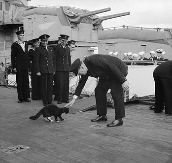 The legend of Unsinkable Sam - the cat who served on and survived ...