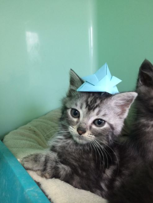 tiny hats for cats 6