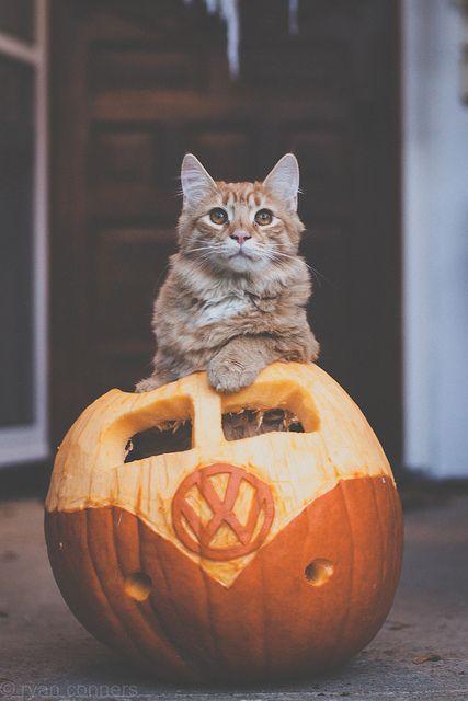 13 Photos Of Pumpkin Spiced Catt 233 S