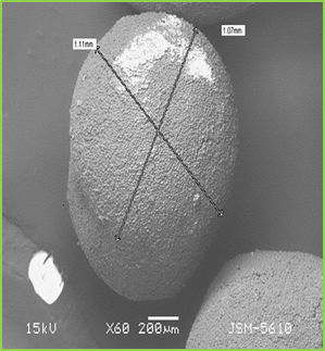 Figure: 7b Scanning Electron Microscopy Images of the Optimized Mucoadhesive Pellets