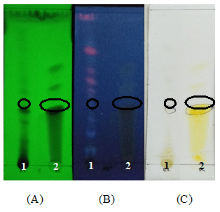 Figure: 1 Profile of Thin Layer Chromatography