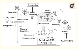 FIG. 8 MECHANISM OF FAVIPIRAVIR