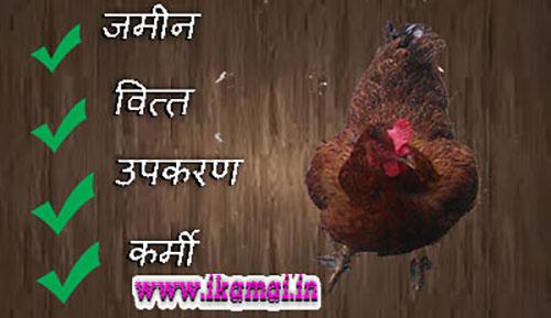 Murgi-Farm-Business in Hindi