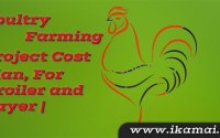 Poultry-Farming-Project-cost-plan-for-broiler-and-layer