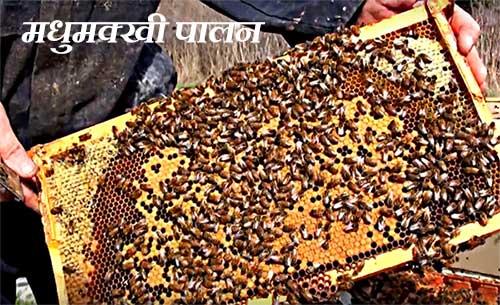 मधुमक्खी पालन Beekeeping-business