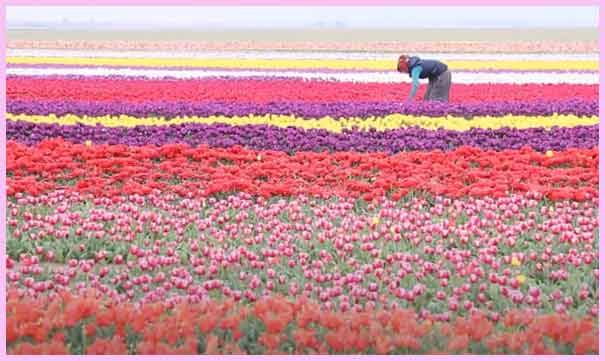 Steps to start Flower Farming Business in Hindi