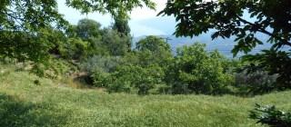 Cours à Ikaria
