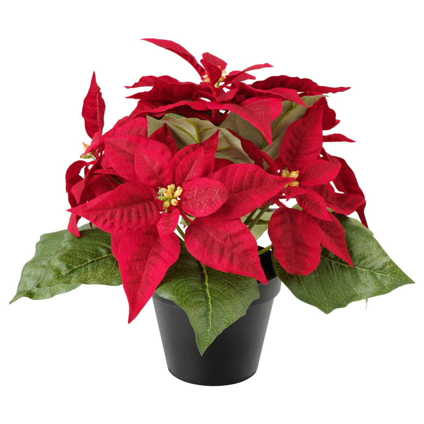 https://i2.wp.com/www.ikea.com/gb/en/images/products/fejka-artificial-potted-plant-poinsettia-red__0538278_pe651824_s5.jpg