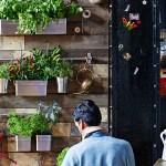 Ratgeber Indoor Garten Tipps Fur Zimmergarten Ikea Schweiz