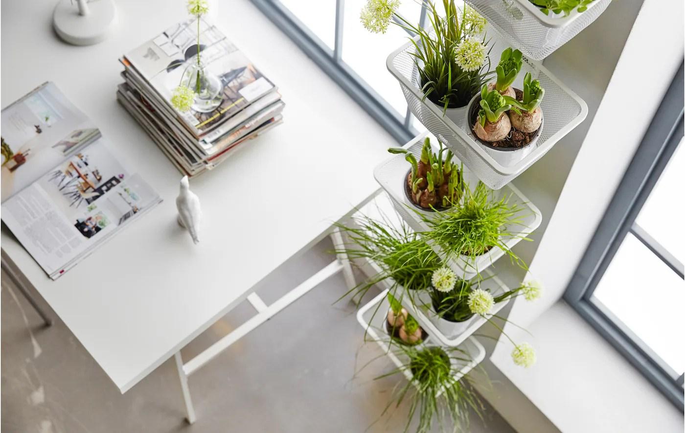 plantes ikea