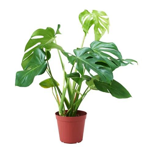 Tall Plants Living Room