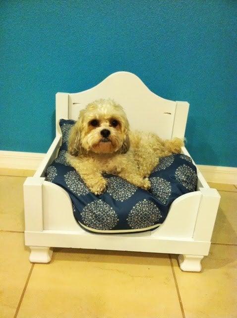 Dog Hack - Side Table converted Dog Bed