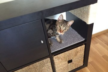 Build Your Own Cat Furniture Ikea Hackers