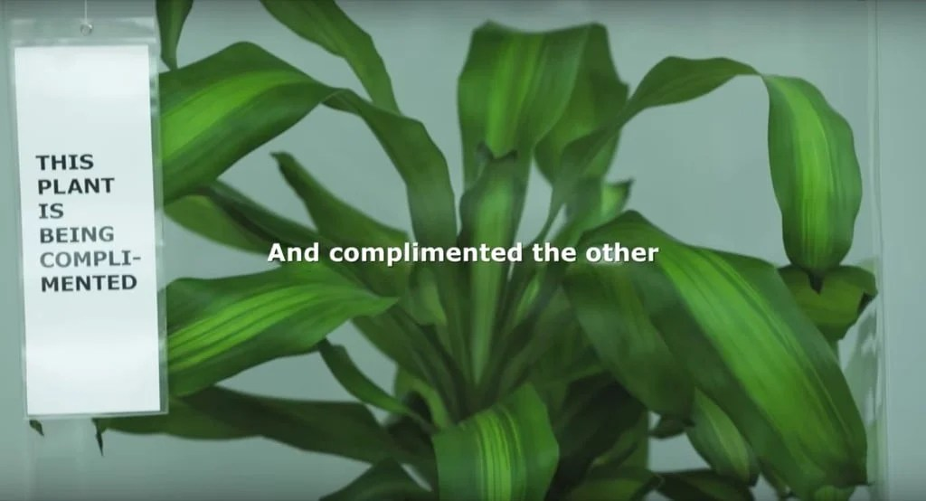 IKEA Bully a Plant experiment shows eye opening results