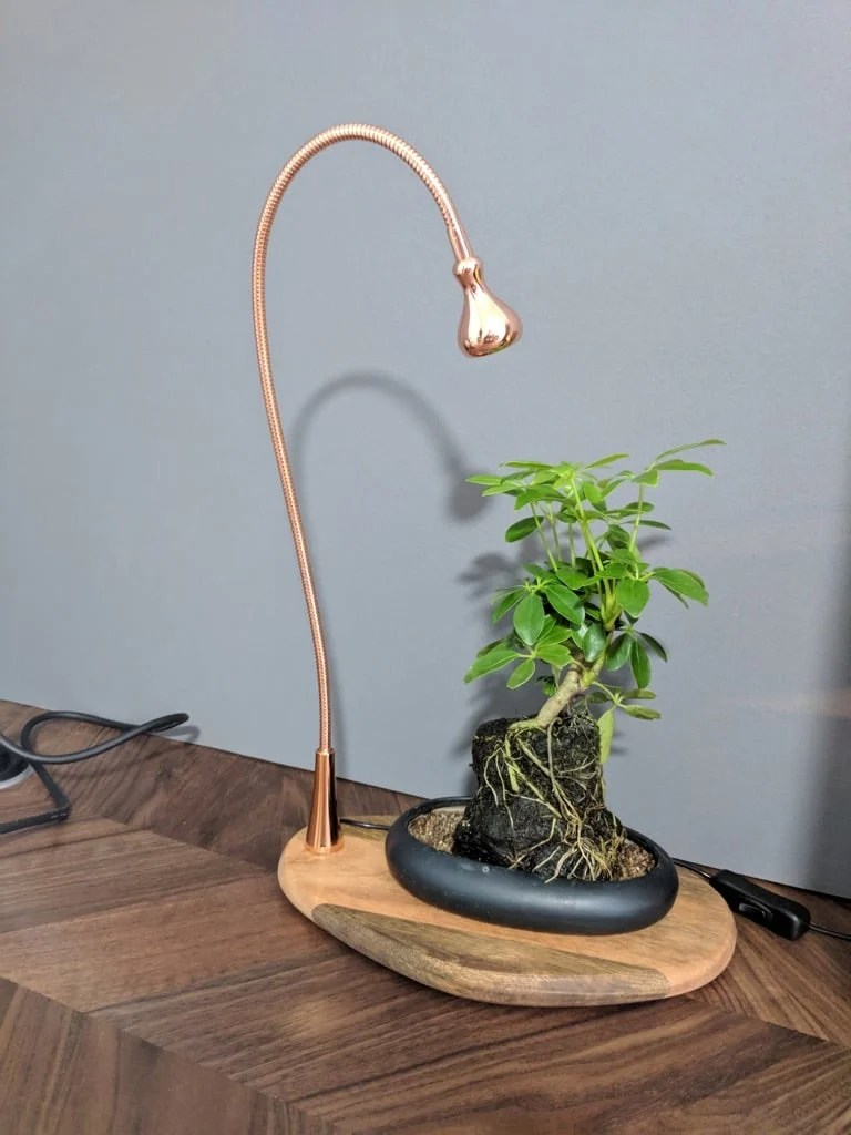 Indoor plant needs light? Try this Plant Tray / Display with Light ...