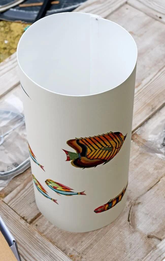 Louis Renard fish illustration