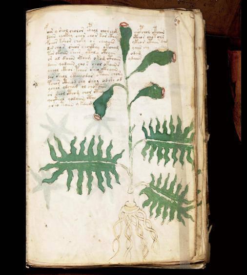 ヴォイニッチ手稿No.6rページ画像