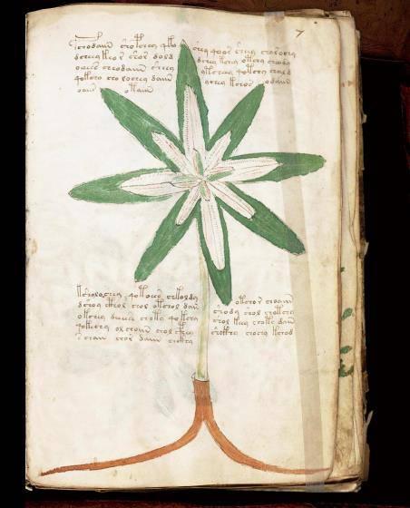 ヴォイニッチ手稿No.7rページ画像