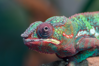 The Girl Who Wanted to Be a Chameleon