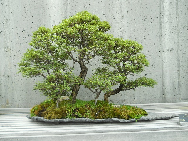 New Challenge of Learning Bonsai