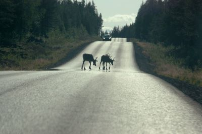 Zomer in Lapland