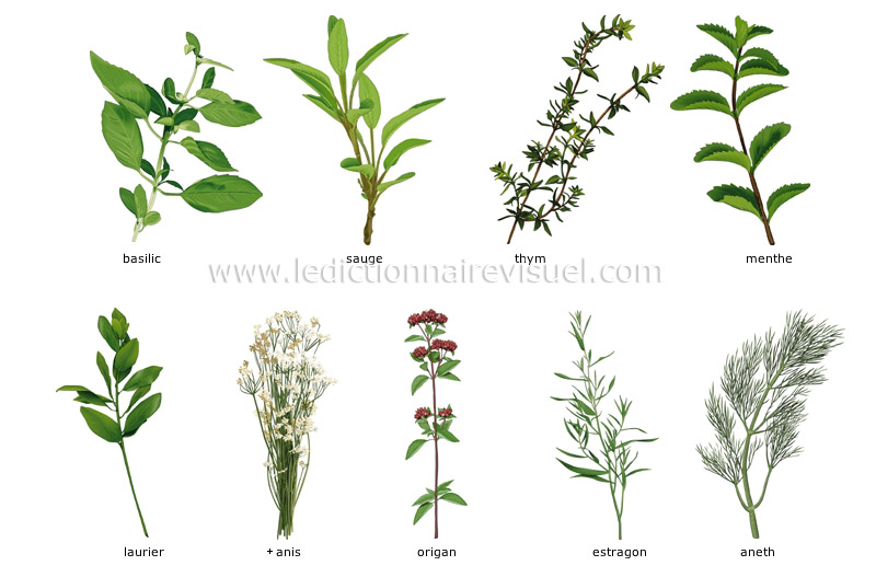 fines herbes - Le Dictionnaire Visuel