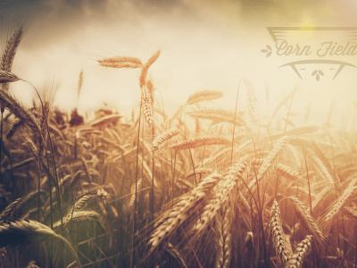 Corn Field V3