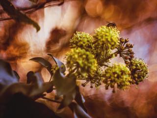 Autumn Bee