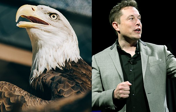 Seven Leadership Lessons You Can Learn from an Eagle
