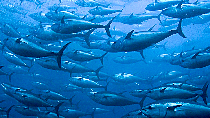 OVERFISHING IS NOT AN OPTION