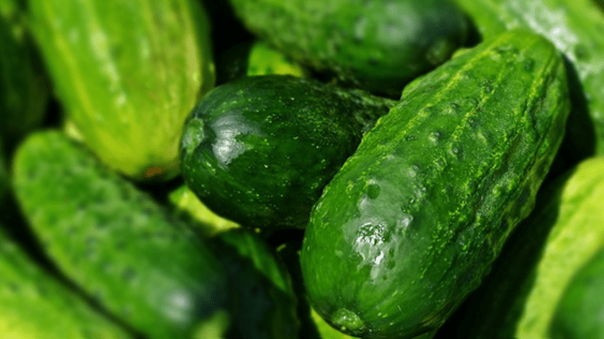 THE HEALTHFUL WONDERS OF CUCUMBERS