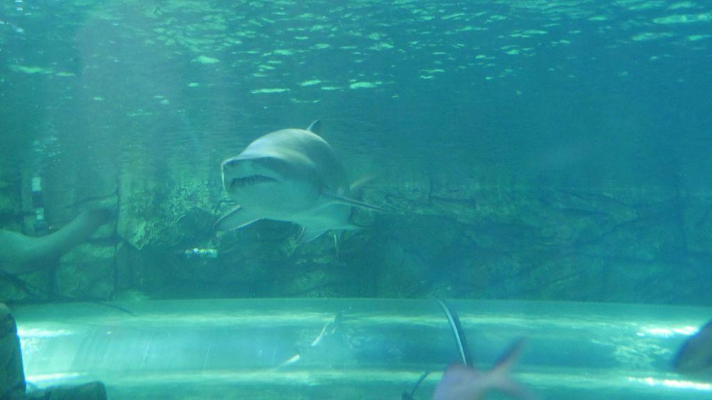 Haai in zijn geheel