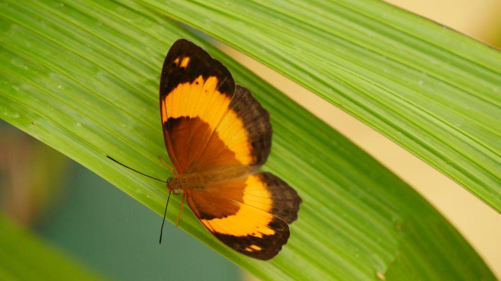 Zwart met gele vlinder