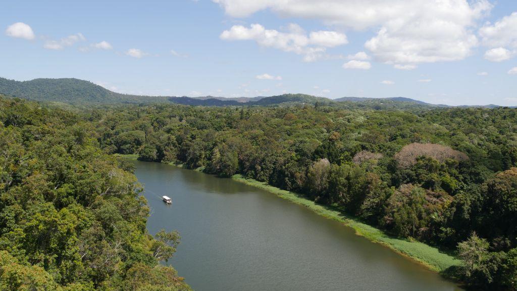 Overzicht over het regenwoud bij Kuranda nabij Cairns