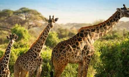Dagaanbieding – Safari & strand Kenia