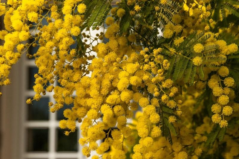 significati del giallo Come vestirsi alla festa della donna, outfit in giallo mimosa