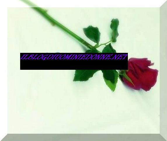 Rosa dedicata da Tara Gabrieletto a Cristian Gallella