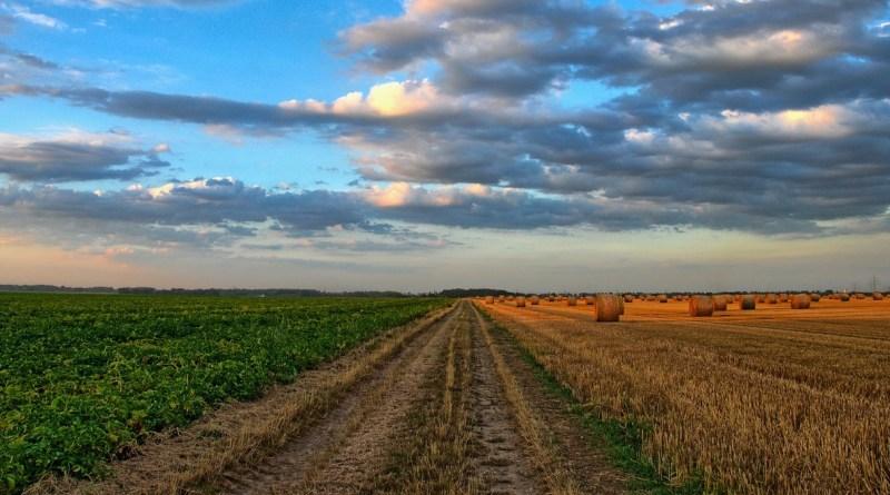 agricoltura solarolo