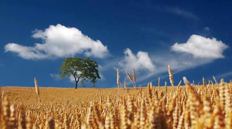 agricoltura innovazione