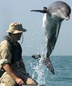 Delfino addestrato all'individuazione di mine navali. Uso legittimo o abuso e alterazione di bioti?